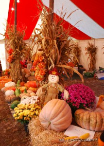 Huge Tent Filled with Pumpkins