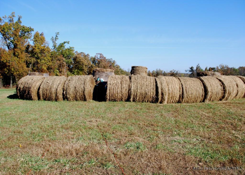 Big Bale Maze