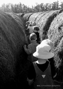 Lost in the bale maze